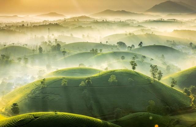 Foto über Teehügel Phu Tho gehört zu Top-Fotos über das schönste Wetter des Jahres - ảnh 1