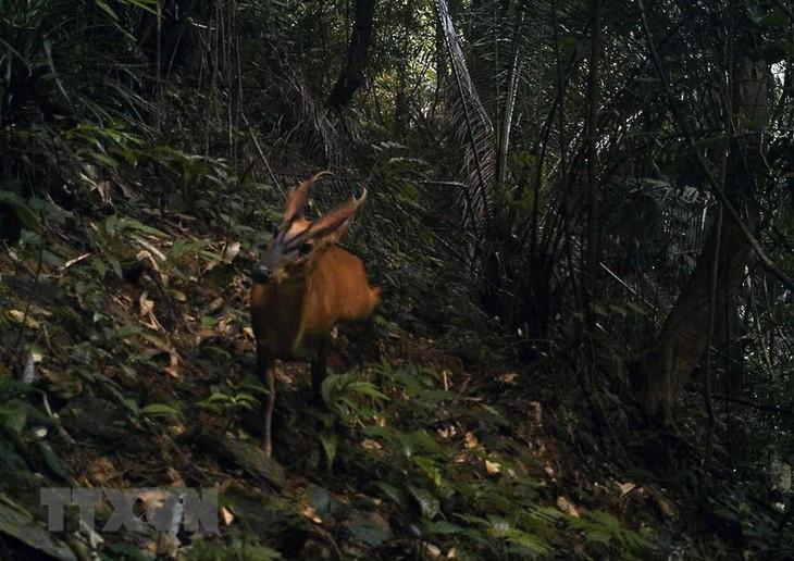 Beiträge der 21 Organisationen und Einzelpersonen zur Erhaltung von Wildtieren ehren - ảnh 1