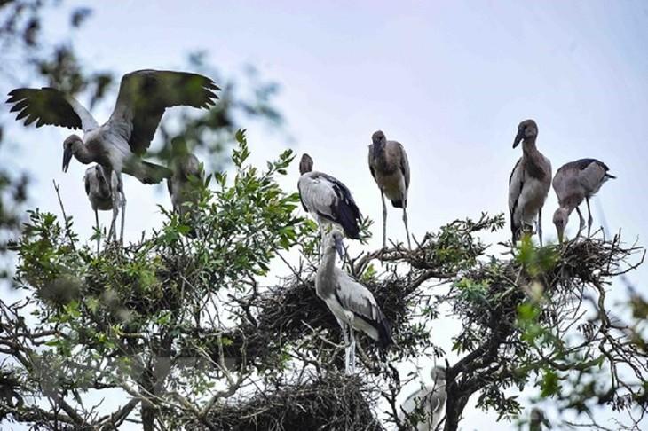 อุทยานแห่งชาติ Tram Chim – เขต Ramsar แห่งที่ 2,000 ของโลก - ảnh 2