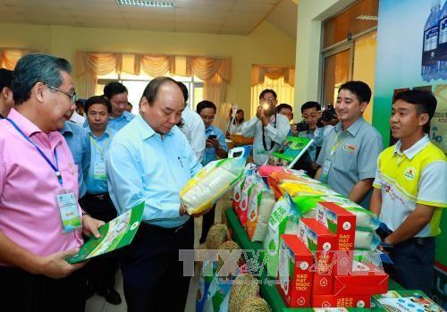 可持续发展九龙江平原水稻产业 - ảnh 1