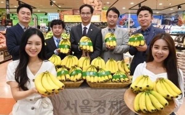 自今年6月起越南香蕉在韩国乐天玛特超市系统正式上市 - ảnh 1