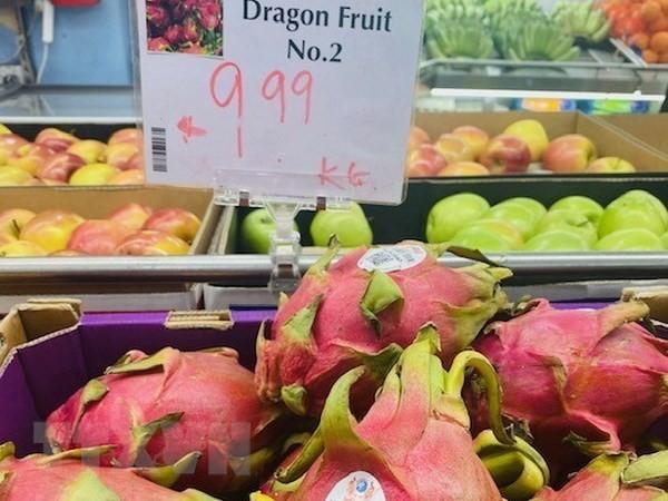 越南火龙果颇受澳大利亚市场欢迎 - ảnh 1