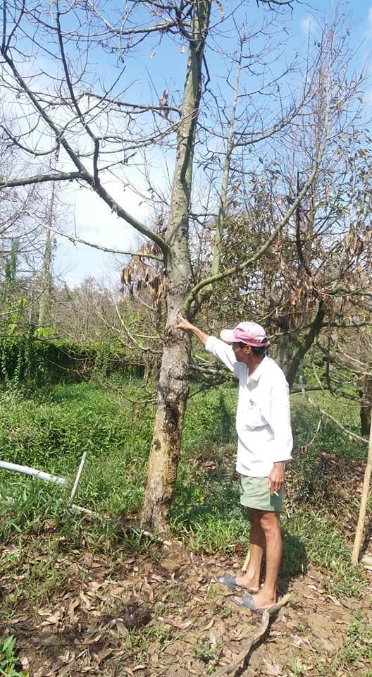 Maßnahmen zur Agrarentwicklung und gegen Dürre - ảnh 1