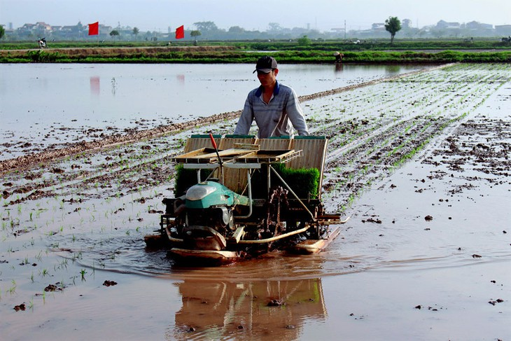 Die Bauern in der Umgebung von Hanoi verstärken Mechanisierung in der Agrarproduktion - ảnh 1