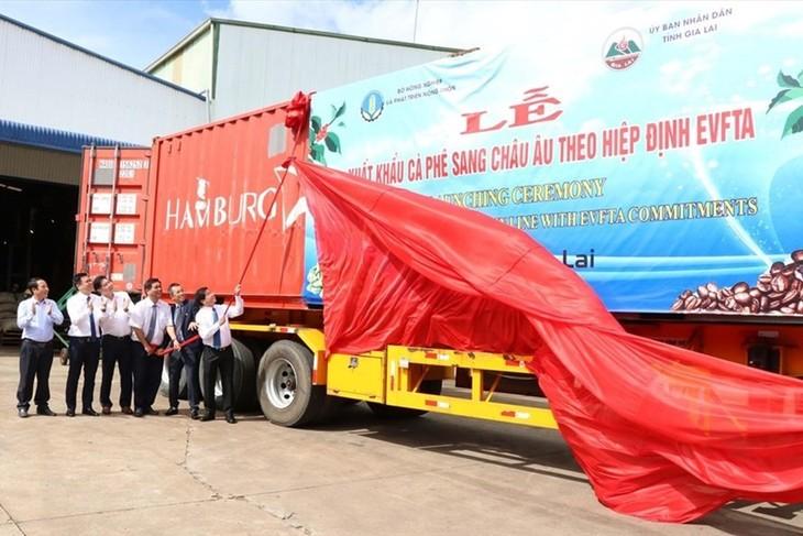 EVFTA: Gia Lai exportiert Kaffee nach Europa - ảnh 1