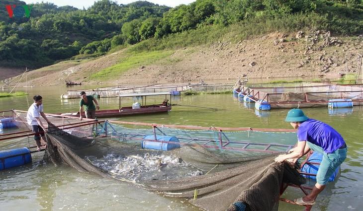 Vietnam y Noruega estrechan cooperación en el cultivo y procesamiento de productos acuícolas - ảnh 1