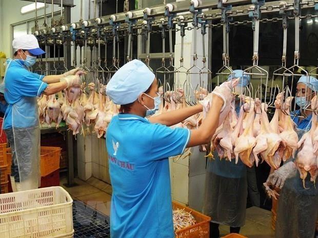Vietnam exportará pollo procesado a Rusia - ảnh 1