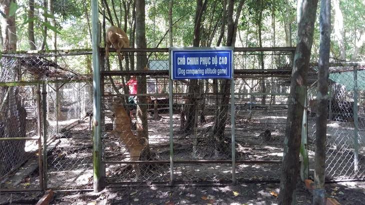 Visitan centro de preservación de crestados de Phu Quoc - ảnh 3