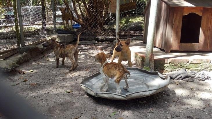 Visitan centro de preservación de crestados de Phu Quoc - ảnh 2