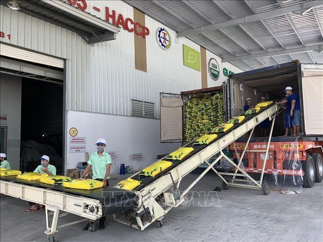 Vietnam envía el primer lote de arroz libre de impuestos a la UE - ảnh 1