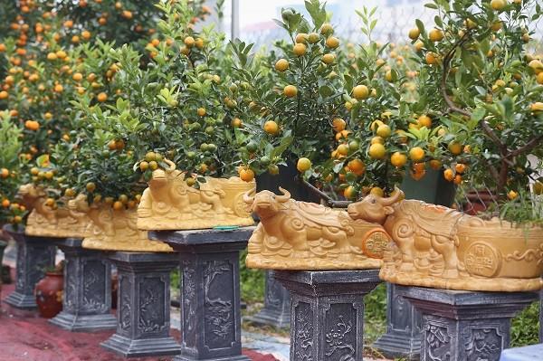 Ambiente dinámico en los viveros de melocotoneros y kumquats en Hanói en vísperas del Tet   - ảnh 3