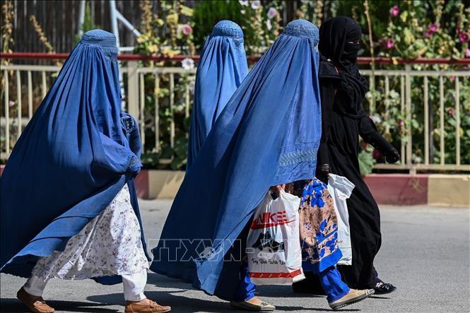 Talibanes implementarán la Constitución monárquica de 1964 - ảnh 1