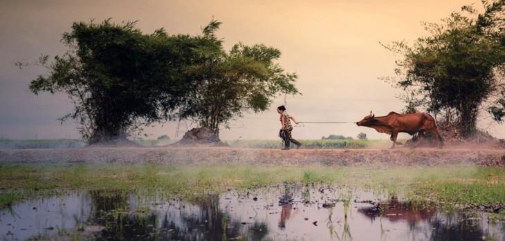 타이 빈 : 소박하고 평화로운 시골 마을 - ảnh 5