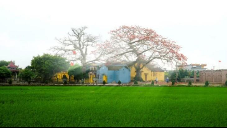 타이 빈 : 소박하고 평화로운 시골 마을 - ảnh 1