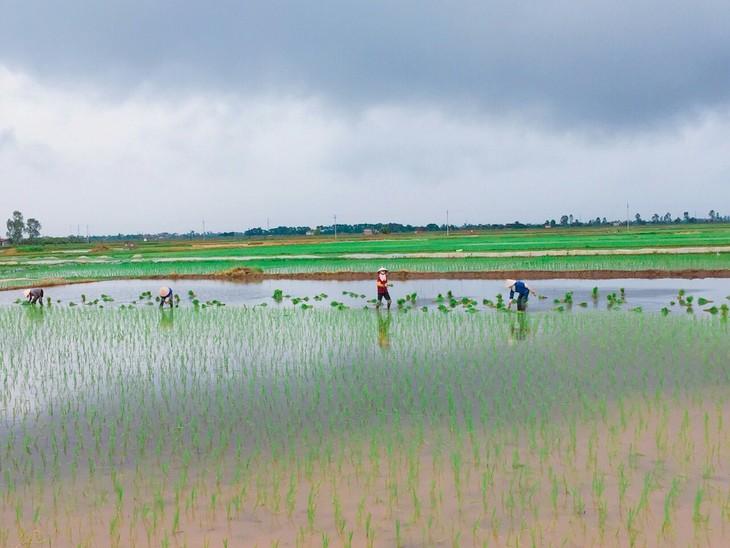타이 빈 : 소박하고 평화로운 시골 마을 - ảnh 2