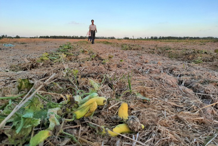 베트남 최남단 까마우 곶, 가뭄 심각  - ảnh 7