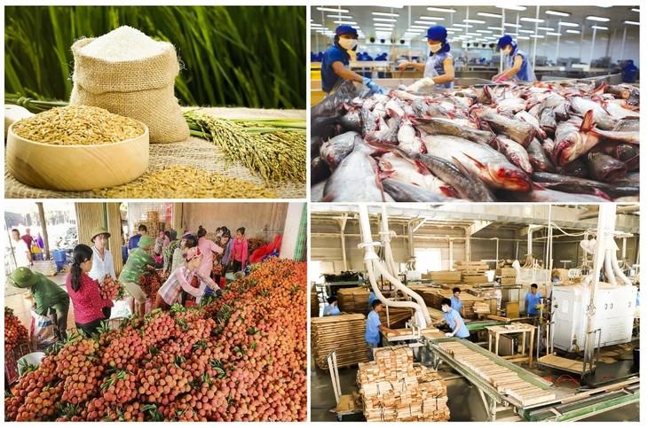 베트남 농업, 팬데믹을 이겨내고 풍요로운 수확을 향해… - ảnh 1