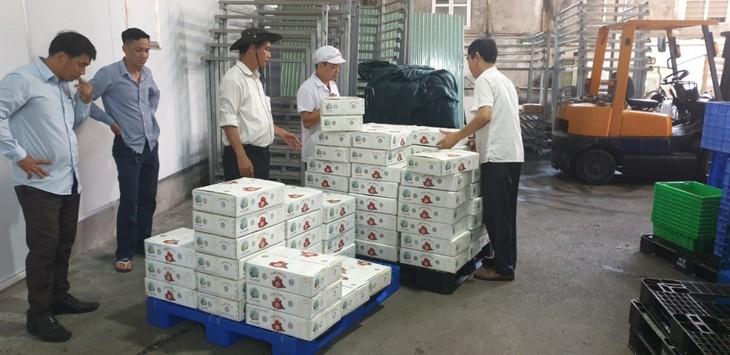 베트남 농업, 팬데믹을 이겨내고 풍요로운 수확을 향해… - ảnh 2