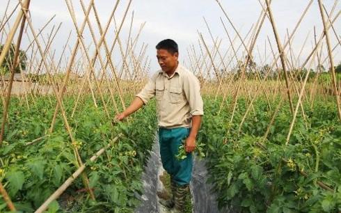 Dô Xuân Dai, exemple d'une jeunesse rurale dynamique - ảnh 1