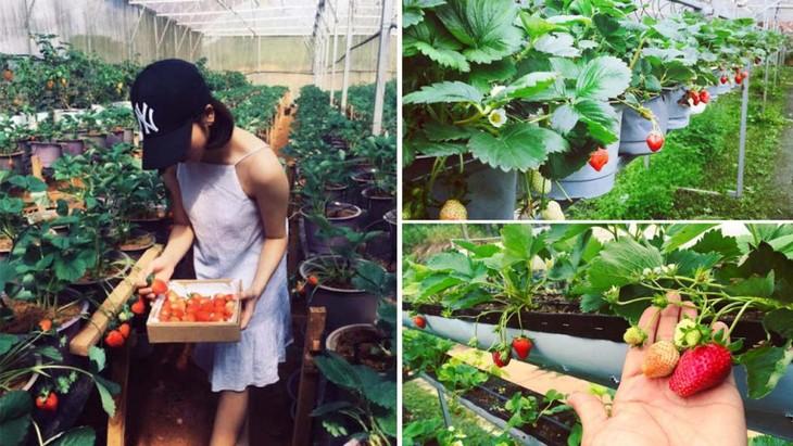 Agrotourisme en plein essor à Dà Lat - ảnh 1