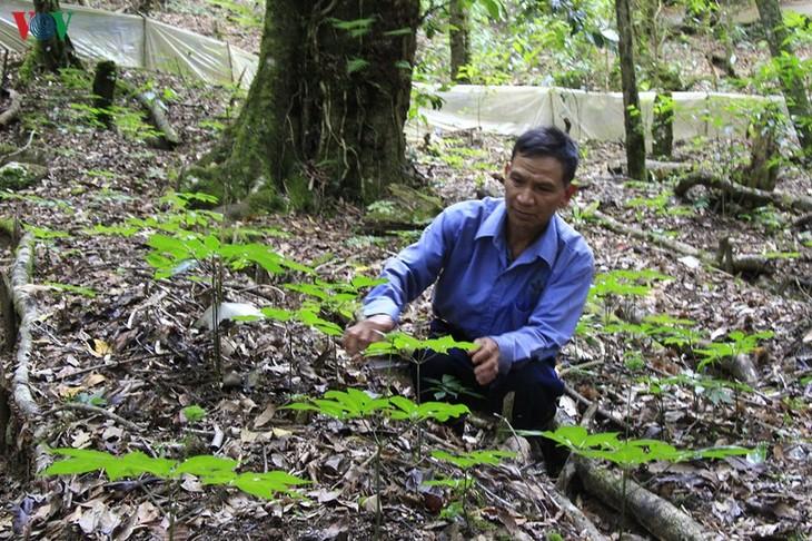 Les plantes médicinales, une aubaine pour les Sedang de Kon Tum - ảnh 2