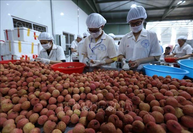 Le litchi vietnamien arrivé dans les supermarchés singapouriens - ảnh 1