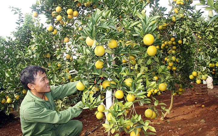 Son La: mieux exporter ses produits agricoles - ảnh 1