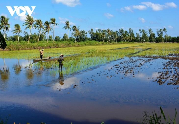 Le Delta du Mékong opte pour un développement adapté au changement climatique - ảnh 1