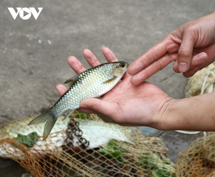 Le poisson de la prospérité - ảnh 1