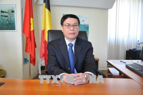 Вьетнам и Бельгия отмечают 45-ю годовщину со дня установления дипотношений - ảnh 1