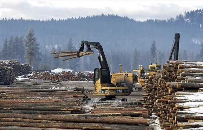 ВТО поддержала Канаду в споре с США о вопросе импорта хвойной древесины - ảnh 1
