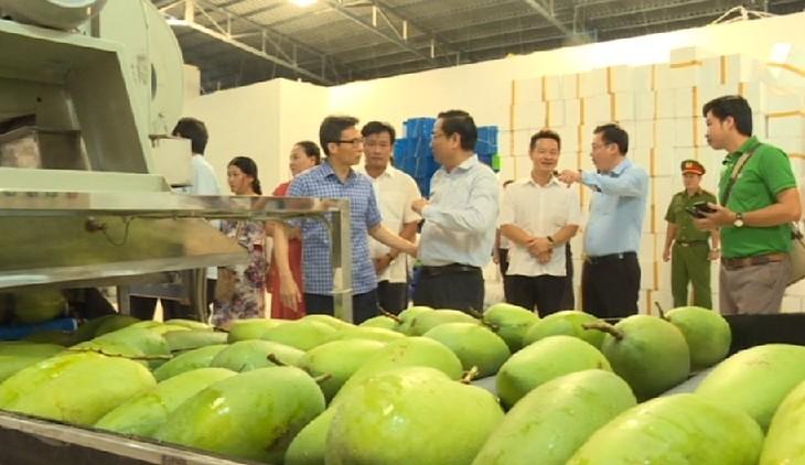 Вице-премьер Вьетнама Ву Дык Дам встретился с руководством крестьянских артелей провинции Донгтхап - ảnh 1