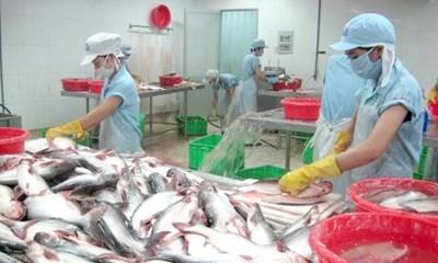 Nhiều tiềm năng xuất khẩu của cá tra vùng ĐBSCL - ảnh 1