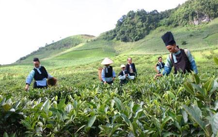 Эффект политики содействия социально-экономическому развитию горных районов Вьетнама - ảnh 1
