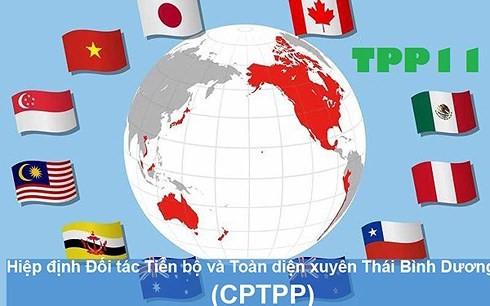Предприятия Вьетнама проявляют инициативы, связанные с ВПСТТП - ảnh 1