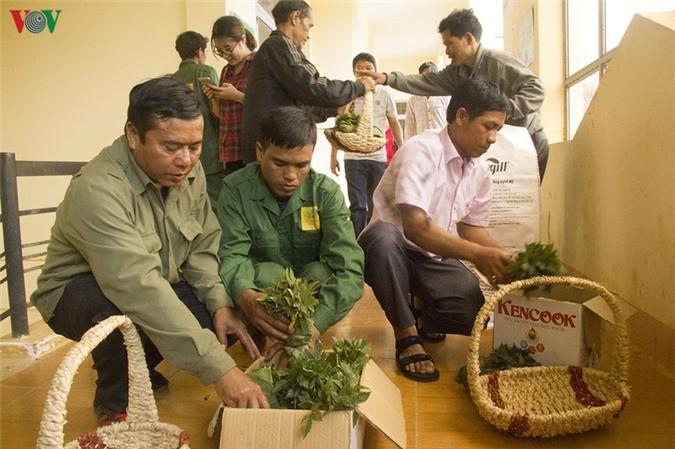 Жизнь народности Седанг в провинции Контум улучшается благодаря лекарственным растениям - ảnh 4