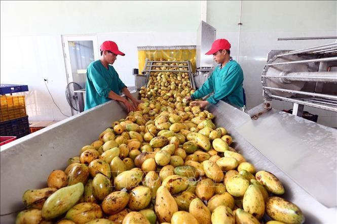 EVFTA способствует повышению качества и созданию бренда сельхозпродукции Вьетнама - ảnh 1