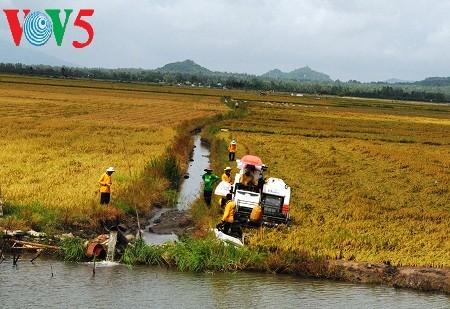 Créer des champs de grande superficie dans le delta du Mékong - ảnh 2