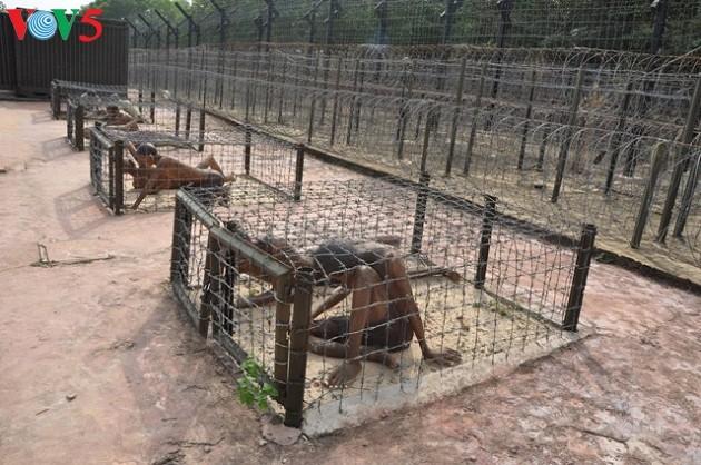 La prison de Phu Quôc, symbole des révolutionnaires indomptables - ảnh 1