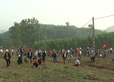 Tuyên Quang phát động Tết trồng cây năm 2014 - ảnh 1