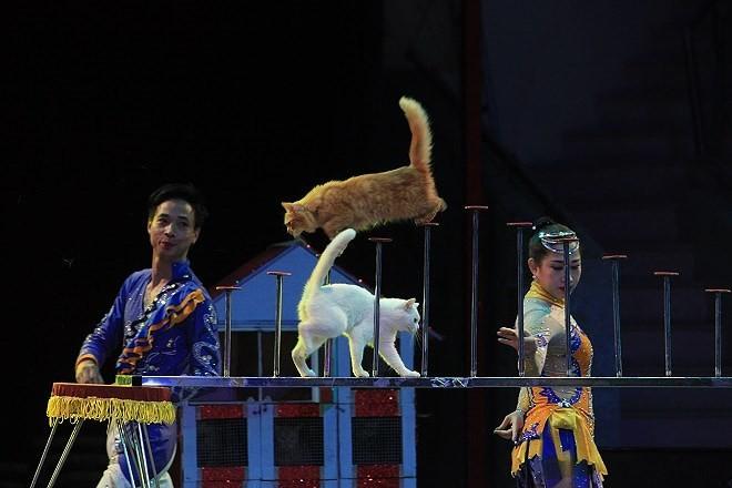 Những vẻ đẹp kỳ diệu của xiếc Việt - ảnh 2