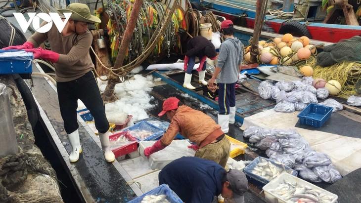 Ngư dân miền Trung liên tục trúng lộc biển - ảnh 1