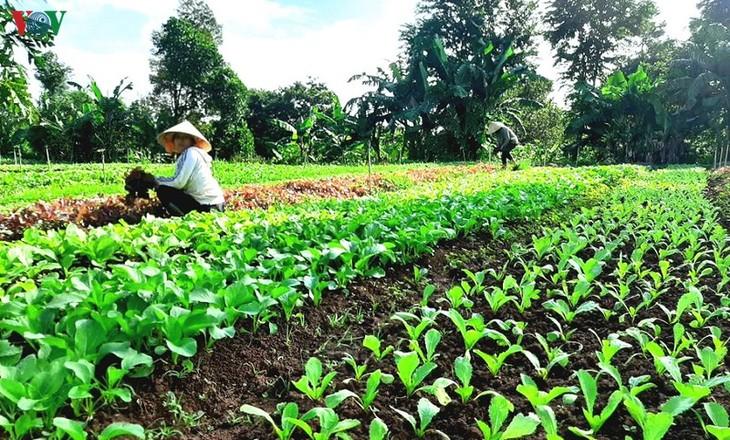 พัฒนาธุรกิจสตาร์ทอัพจากการทำเกษตรปลอดสารพิษ - ảnh 1