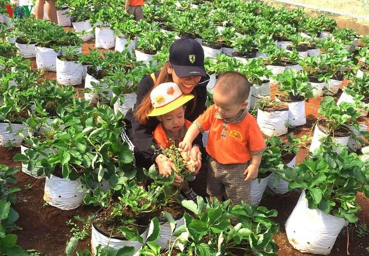 พัฒนาธุรกิจสตาร์ทอัพจากการทำเกษตรปลอดสารพิษ - ảnh 3