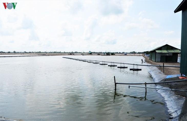 ประยุกต์ใช้เทคโนโลยีขั้นสูงในการผลิตปลาสวายเพื่อส่งออก - ảnh 1