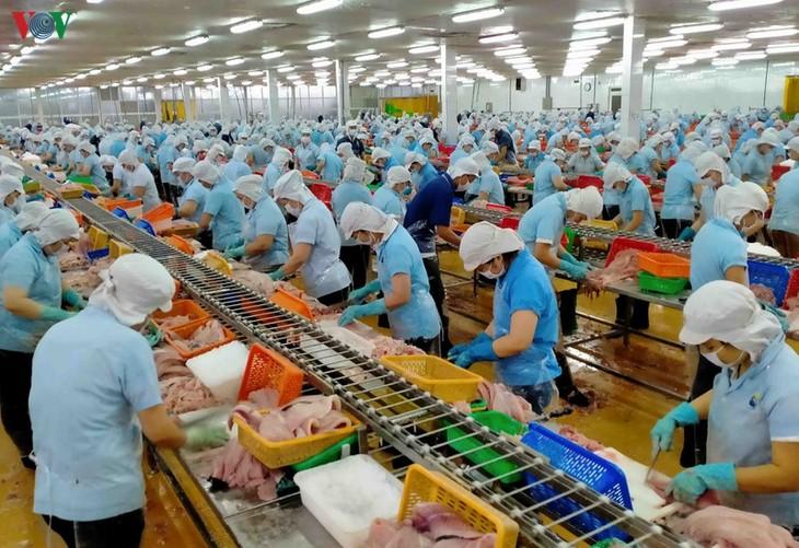 ประยุกต์ใช้เทคโนโลยีขั้นสูงในการผลิตปลาสวายเพื่อส่งออก - ảnh 3