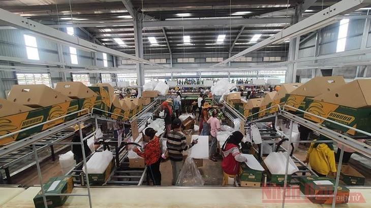 บริษัทTHAGRICO ของเวียดนามมีส่วนร่วมสร้างงานทำให้แก่ประชาชนในกัมพูชา - ảnh 1